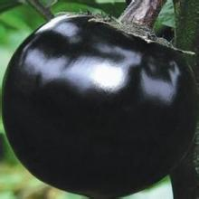 黑宝圆茄子苗