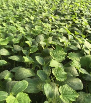 寿光蔬菜育苗厂
