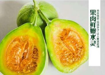 芝麻蜜甜瓜苗品种